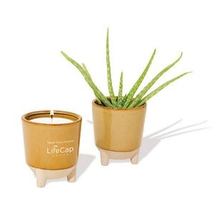 Modern Sprout� Glow & Grow Live Well Gift Set - Amber: Desert Oasis w- Aloe Seeds